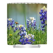 Buzzing The Bluebonnets 01 Shower Curtain