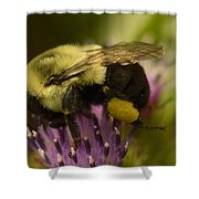 Buzzy Bee 2 Shower Curtain