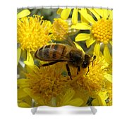 Buzzzzzy Shower Curtain by Lainie Wrightson