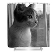 Bw The Inquisitive Kitty Jackson Shower Curtain
