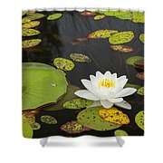 Bwca Water Lily Shower Curtain