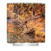 By The Bank Of The Golden Forest Shower Curtain