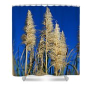 By The Sea By Diana Sainz Shower Curtain