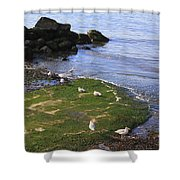 By The Shoreline Shower Curtain