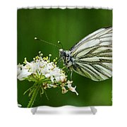 Cabbage Butterfly Shower Curtain