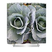 Cabbage Duo Shower Curtain