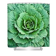 Cabbage Leaves Shower Curtain