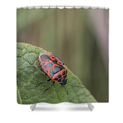 Cabbage Shield Bug Shower Curtain