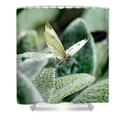 Cabbage White Butterfly In Flight Shower Curtain