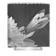 Cabbage White Butterfly On Cosmos - Black And White Shower Curtain