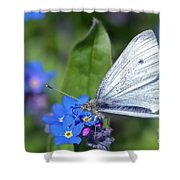 Cabbage White Butterfly On Forget-me-not Shower Curtain