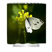 Cabbage White Butterfly On Yellow Flower Shower Curtain