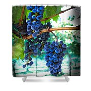 Cabernet Sauvignon Grapes Shower Curtain by Robert Bales