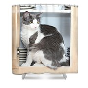Cabinet Cat Shower Curtain