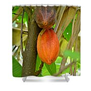 Cacao Shower Curtain