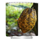 Cacao Plant Shower Curtain by Aged Pixel