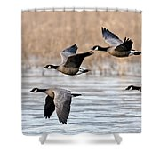 Cackling Geese Flying Shower Curtain