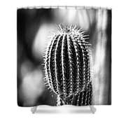 Cacti B And W  Shower Curtain