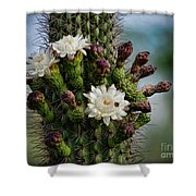 Cacti Bouquet  Shower Curtain