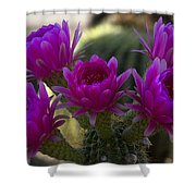 Cacti Flower Bouquet  Shower Curtain