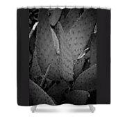 Cactus 5256 Shower Curtain