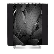 Cactus 5256 Shower Curtain