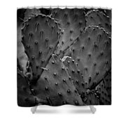 Cactus 5264 Shower Curtain