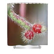 Cactus Berries Shower Curtain