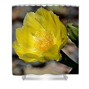 Cactus Bloom Shower Curtain