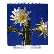 Cactus Blooms Shower Curtain