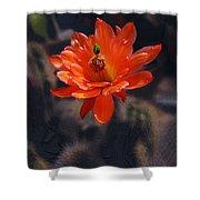Cactus Blossom 1 Shower Curtain