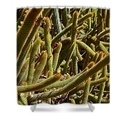 Cactus Cactus Shower Curtain