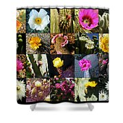 Cactus Collage Shower Curtain