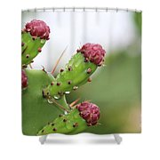 Cactus Dew 2 Shower Curtain