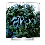 Cactus Family Almeria Region Spain 2013 January Shower Curtain