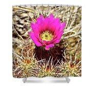 Cactus Flower Palm Springs Shower Curtain