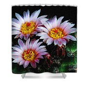 Cactus Flowers With Texture Shower Curtain