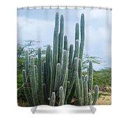 Cactus In Aruba Shower Curtain