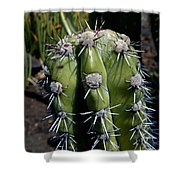 Cactus In Hawaii Shower Curtain