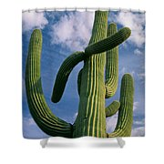 Cactus In The Clouds Shower Curtain