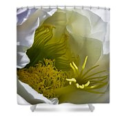 Cactus Interior Shower Curtain