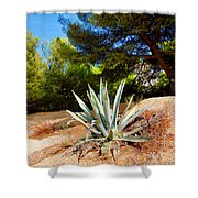 Cactus On A Rocky Coast Of French Riviera Shower Curtain