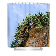 Cactus On A Cliff Shower Curtain