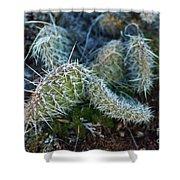 Cactus Plant 1 Shower Curtain