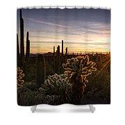 Cactus Sunset  Shower Curtain