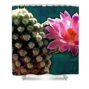 Cactus With Pink Sunlit Bloom Shower Curtain