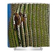 Cactus Wren With Offspring In A Saguaro Cactus In Tucson Sonoran Desert Museum-arizona Shower Curtain
