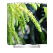 Cactus2750 Shower Curtain