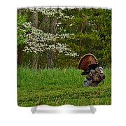 Cades Cove Spring Visions Shower Curtain