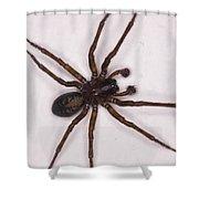 Caffeine Crazed Arachnoid Shower Curtain